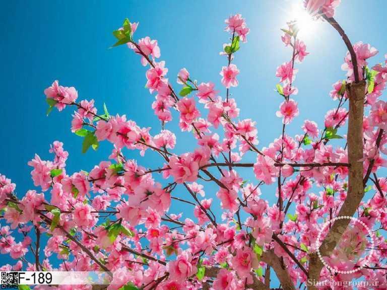 نمونه سقف آسمان مجازی شکوفه