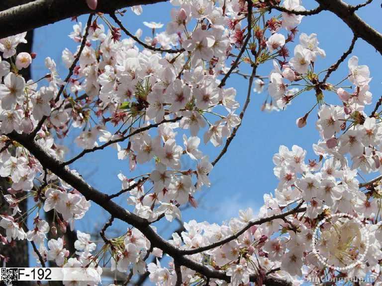 نمونه سقف آسمان مجازی بهار